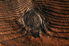 Eye of a tree stock photo