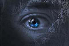 Eye among trees Royalty Free Stock Images