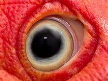 Eye turkey duck Stock Images
