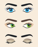 Eye vector at different positions. Beautiful female eye. Eyes lo Stock Photography