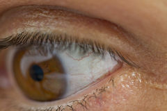 Eye veins Royalty Free Stock Photo