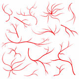 Eye veins. Human eye vessels, blood arteries set. Medical eyeball vein arteries system. Vector illustration Stock Photos