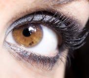 Eye vicino in su Immagine Stock