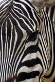The Eye View. An abstract of a zebra Royalty Free Stock Photo