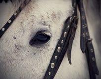 An eye of a white horse. Stock Photos