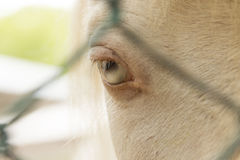 An eye of white horse in a zoo in Million Years Stone Park in Pattaya, Thailand Royalty Free Stock Photos