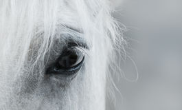 Eye of white mustang Stock Photography