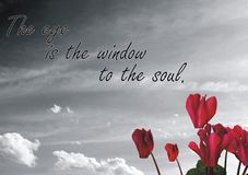 The eye is the window to the soul. Quote royalty free stock photos