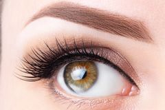 Free Eye With Long Eyelashes And Light Brown Eyebrow Close-up. Eyelashes Lamination, Microblading, Tattoo, Permanent, Cosmetology, Royalty Free Stock Images - 152619029