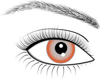 Eye of woman Stock Images