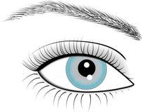Eye of woman. Illustration of eye of woman Royalty Free Stock Photos