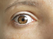 Eye of woman. Beautiful Woman Brown Eye. Close-up with great details Royalty Free Stock Photos
