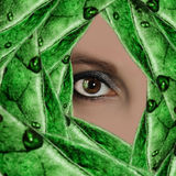 The eye of woman Stock Photos