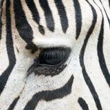 Eye of zebra Royalty Free Stock Photo