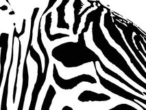 Eye of a zebra Royalty Free Stock Images