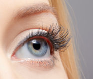 Eye zone makeup Stock Images