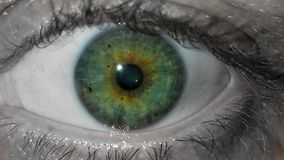 eyeball royalty free stock photography