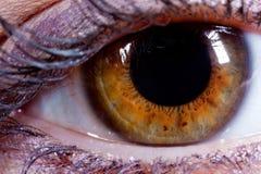 Eyeball Closeup Stock Photography