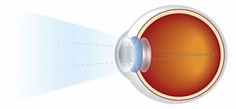 Eyeball - Cross Section Illustrated royalty free illustration