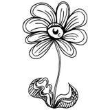 Eyeball Flower Stock Photography