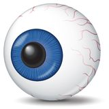 Eyeball illustration. Detailed illustration of an eyeball. White background Royalty Free Stock Images