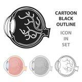 Eyeball o ícone no estilo dos desenhos animados isolado no fundo branco Ilustração do vetor do estoque do símbolo dos órgãos ilustração do vetor
