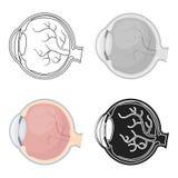 Eyeball o ícone no estilo dos desenhos animados no fundo branco Ilustração do vetor do estoque do símbolo dos órgãos ilustração royalty free
