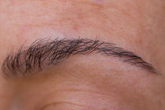 Eyebrow. Caucasian woman left eyebrow detailed view without eye stock photography