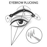 Eyebrow plucking concept Stock Image