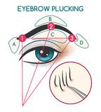Eyebrow plucking illustration. Eyebrow plucking vector illustration. Tweezing eyebrows diagram with eye and brow Royalty Free Stock Image
