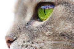 eyed πράσινος γατών στοκ εικόνα με δικαίωμα ελεύθερης χρήσης