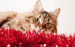 eyed πράσινος γατών Στοκ εικόνες με δικαίωμα ελεύθερης χρήσης