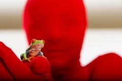 eyed вал красного цвета персоны лягушки стоковые изображения rf