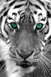 eyed зеленый цвет богини Стоковое фото RF