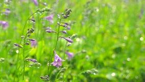 Eyedrops da chuva que caem no fundo do jardim do verão, molhar do gramado da grama verde plantas das flores que florescem a plant video estoque