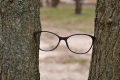 Eyeglass frame between trees. Eyesight. stock image
