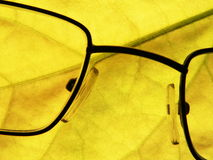 Eyeglasses. On the yellow leaf background Royalty Free Stock Images