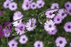 eyeglasses Στοκ Εικόνα