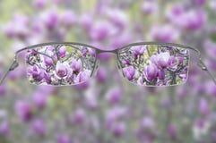 eyeglasses Стоковое Изображение RF
