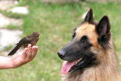 Eyeing each other. Dog and bird eyeing each other stock photography