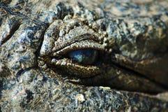 eyeing prey вверх Стоковое Изображение