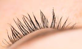eyelash Close-up imagem de stock royalty free