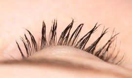 eyelash Close-up fotos de stock