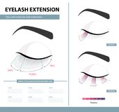Eyelash extension guide. Density of eyelash extension for great look. Tips and tricks. Infographic vector illustration. Template. For Makeup and cosmetic Royalty Free Stock Images