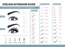 Eyelash extension guide. Different Types of False Eyelashes. Infographic vector illustration. Template for Makeup. And cosmetic procedures. Training poster Stock Photos