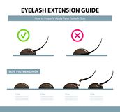 Eyelash extension guide. How to properly apply false eyelash glue. Glue  polymerization step by step. Infographic vector illustration. Training poster Royalty Free Stock Image