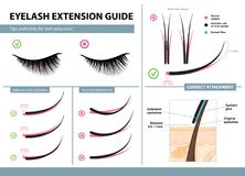 Eyelash extension guide. Tips and tricks for lash extension. Infographic vector illustration. Correct and incorrect attachment. Training poster Royalty Free Stock Images