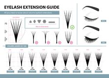 Eyelash extension guide. Volume eyelash extensions. 2D - 10D Volume. Tips and tricks. Infographic vector illustration. Template for Makeup and cosmetic Royalty Free Stock Photography