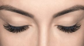 Eyelash extension procedure. Stock Image