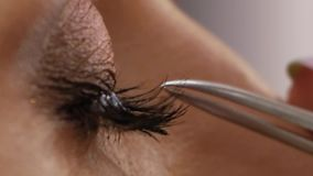 Eyelash extension procedure. Female eye with long eyelashes. Eyelashes, close up, macro stock video